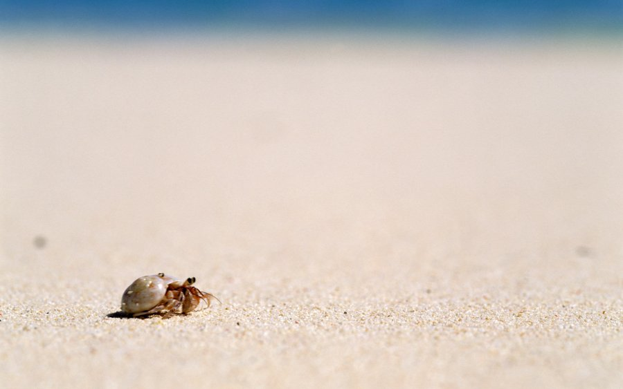 Shells On The Beach Travel Photography Picture HD Wallpaper