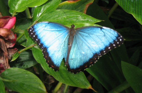 The Most Beautiful Insect Butterfly Blue Black Animal Photo And Picture