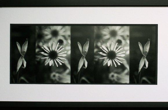 Flower Prints Framed Art Black And White High Quality In HD Wallpaper