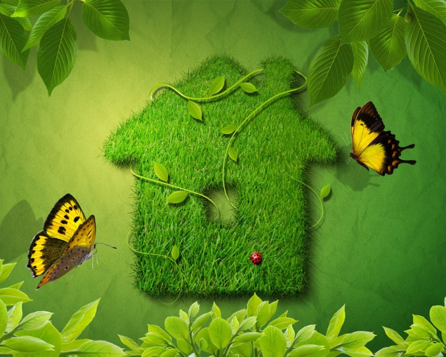 Go Green Butterfly HD Wallpaper Image Picture Original Size