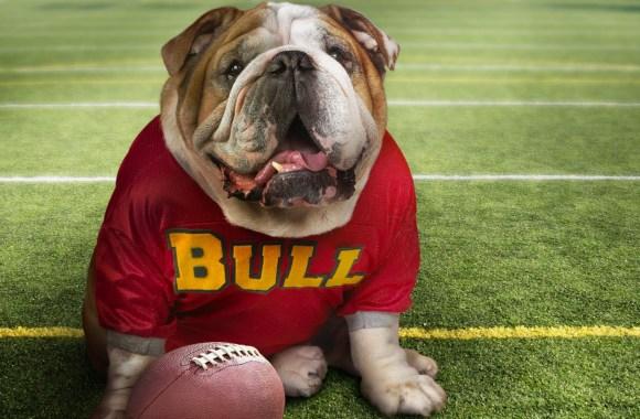 Georgia Bulldogs Mascot Wallpaper