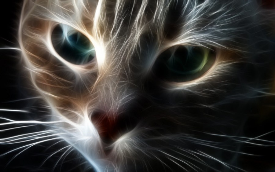 Abstract Face of Cat
