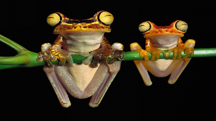 Frogs Hanging Out