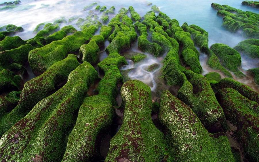 Green Rocks by the Ocean HD Wallpaper