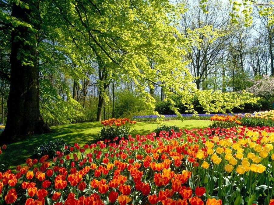 Tulips in the Park-1920