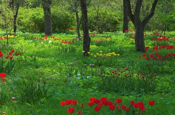 Wild Flowers in the Woods HD Wallpaper