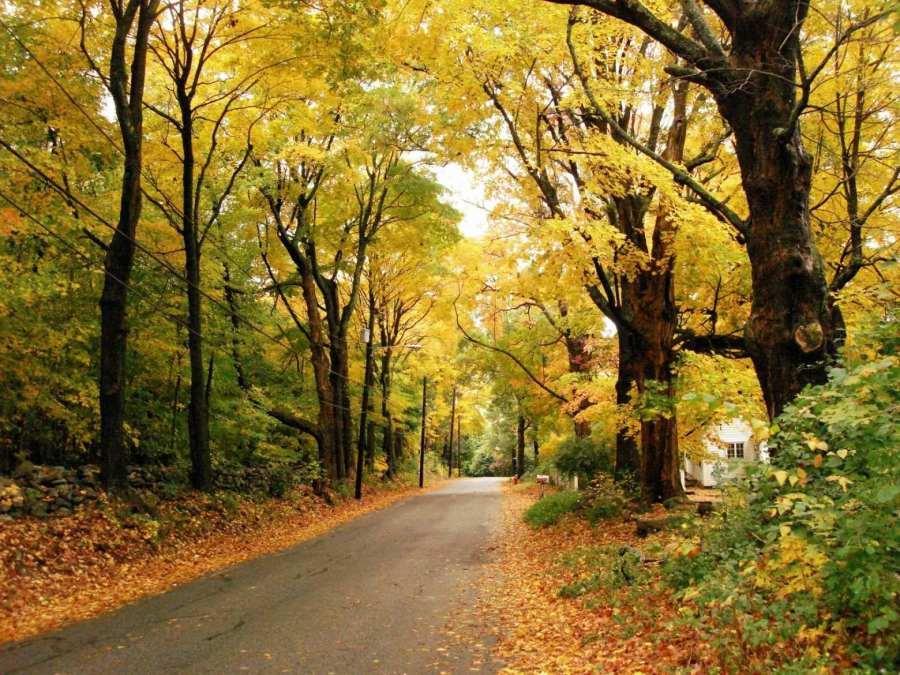 Fall Yellow Scene