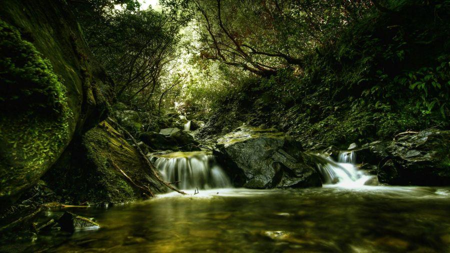 Photo of Waterfall in Woods HD Wallpaper by Wallsev.com