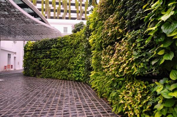 Plante Green Wall Vertical Garden - Wallspan