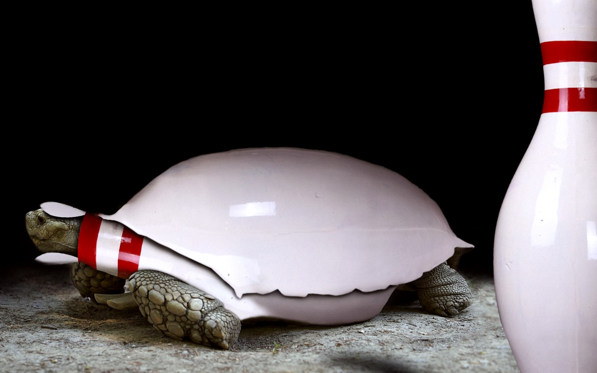 Cool 3d Abstract Wallpapers Funny Bowling On Turtle Wallpapers Hd Desktop And Mobile