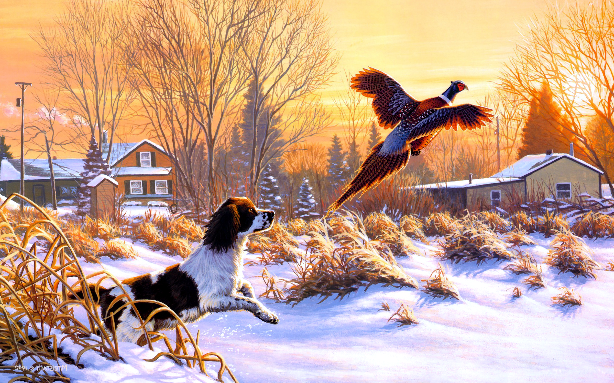 Fall Wallpaper With Dogs Funny Flying Dog And Bird Wallpapers Hd Desktop And