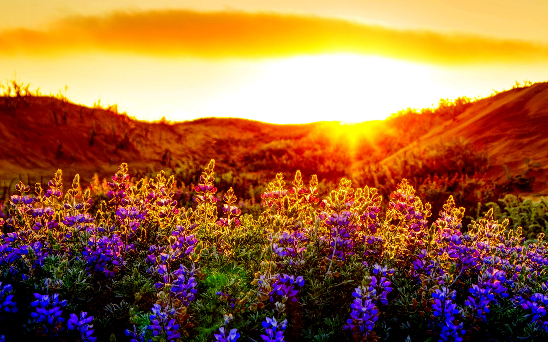 flowering sunsets wallpapers