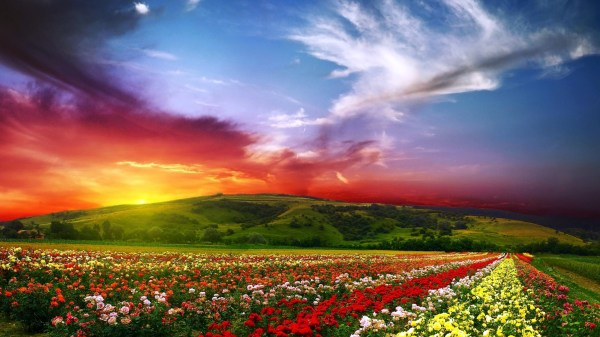 colorful flower landscape wallpapers