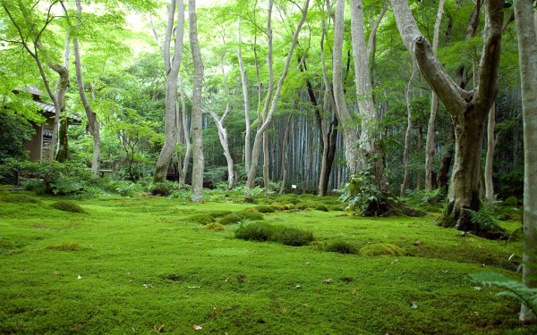 green forest landscape wallpapers