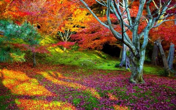 nature landscape colorful wallpapers