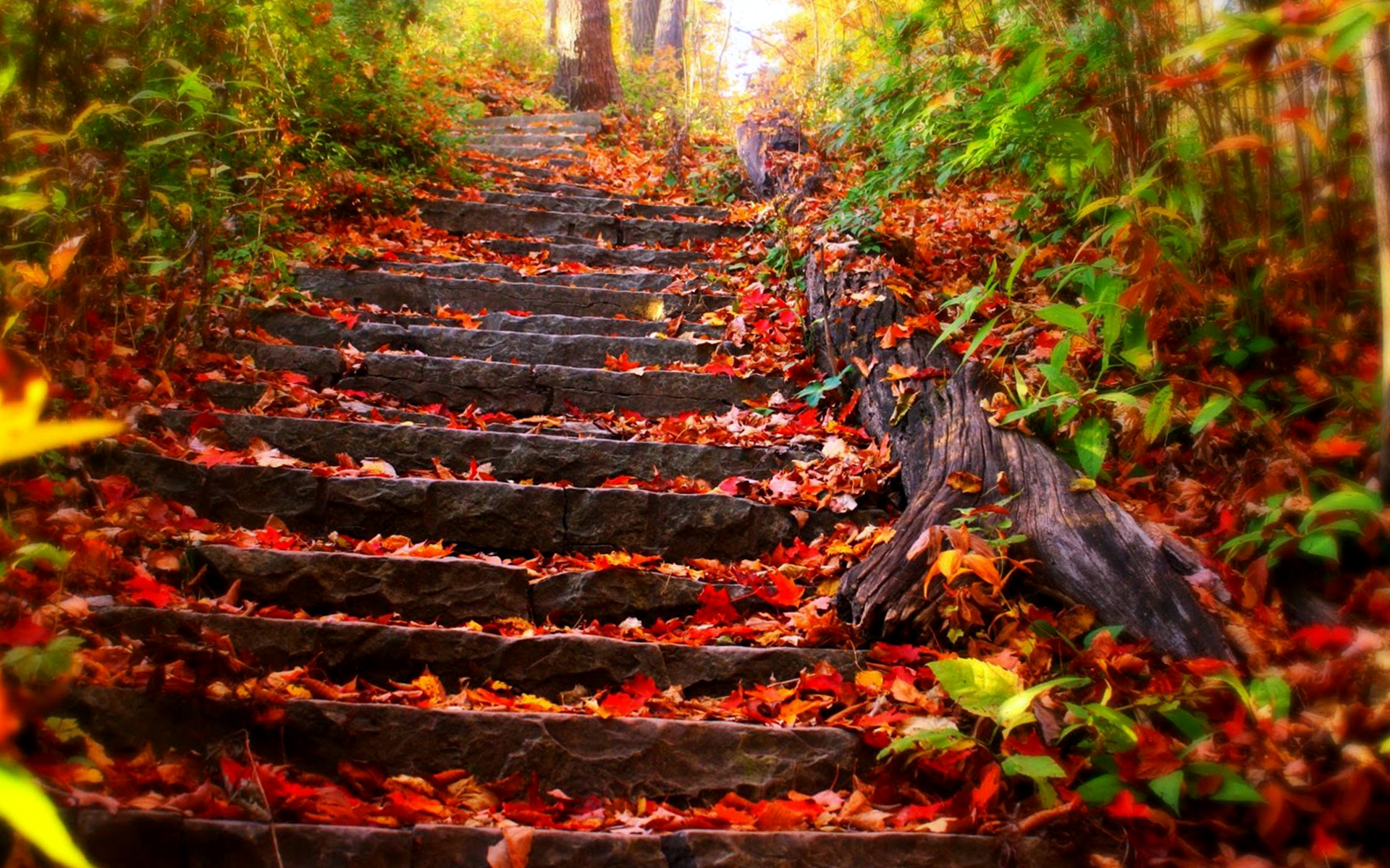 New England Fall Wallpaper Free Nature Stairs On Autumn Leaf Wallpapers Hd Desktop And