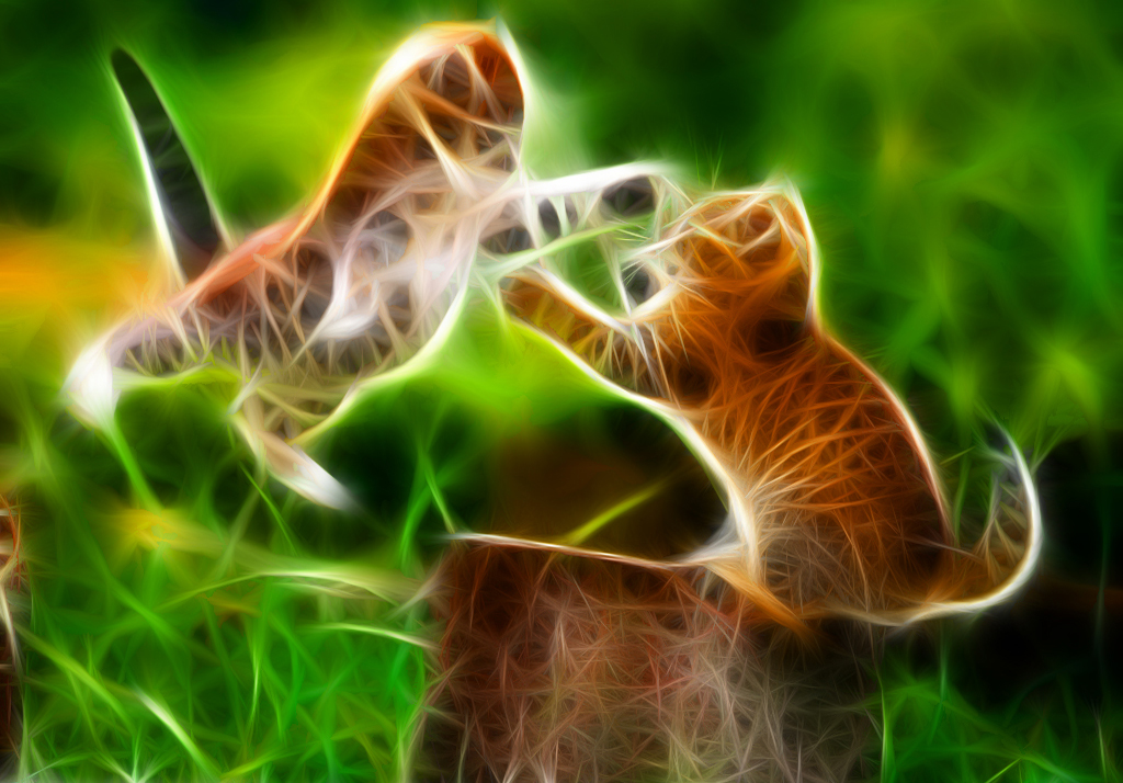 Cute Cat Hd Wallpapers For Mobile Cat Fight Neon Wallpapers Hd Desktop And Mobile Backgrounds