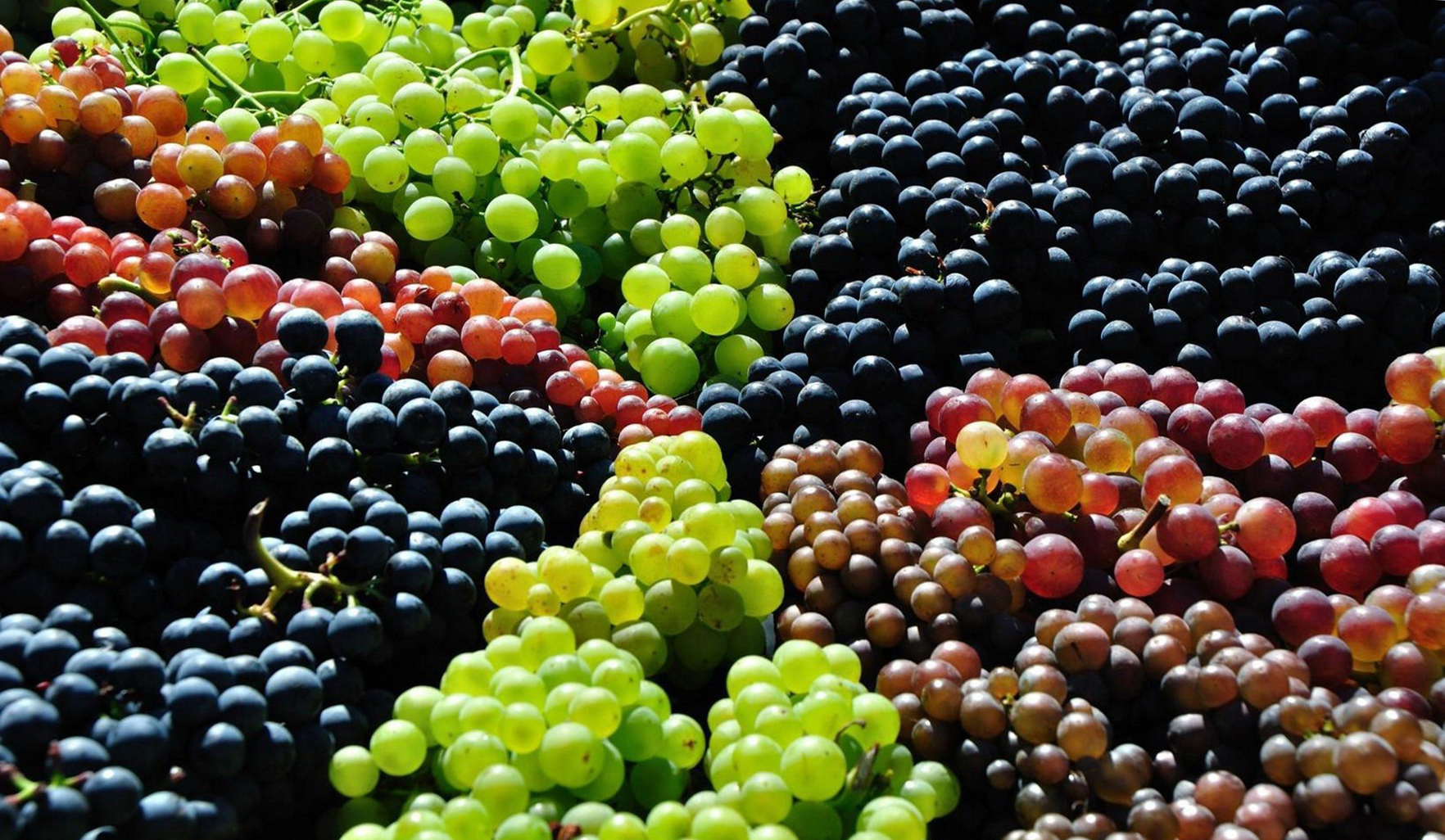 Cute Animal Wallpapers For Desktop Background Full Screen Grapes In Different Colors Wallpapers Hd Desktop And