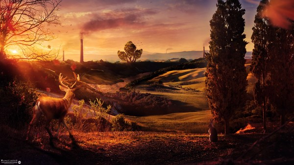 Deer Digital Art Sunset