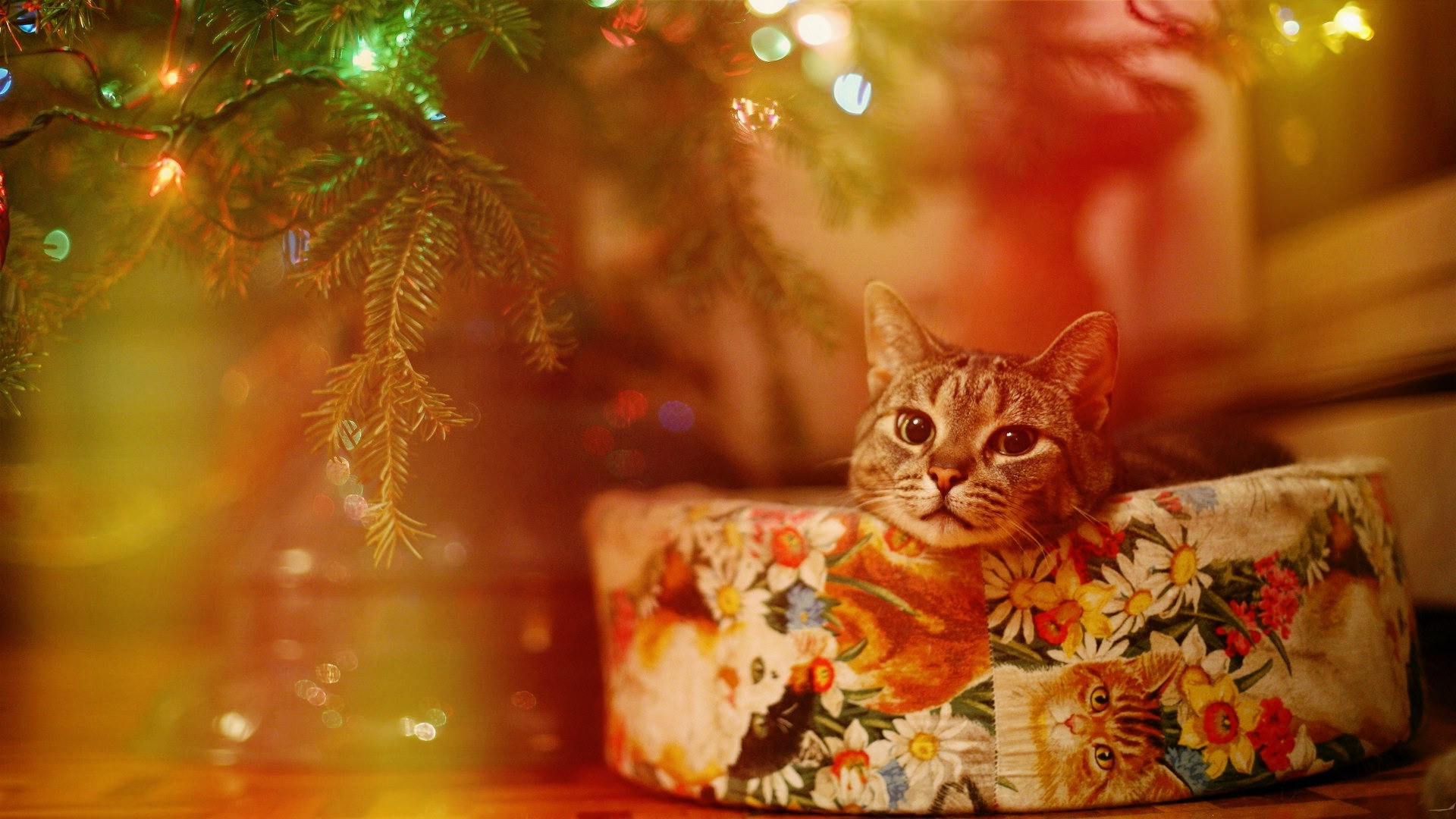 Cute Background Wallpaper For Computer Christmas Lights Animal Hd Cat Lights Christmas Wallpapers Hd Desktop And Mobile