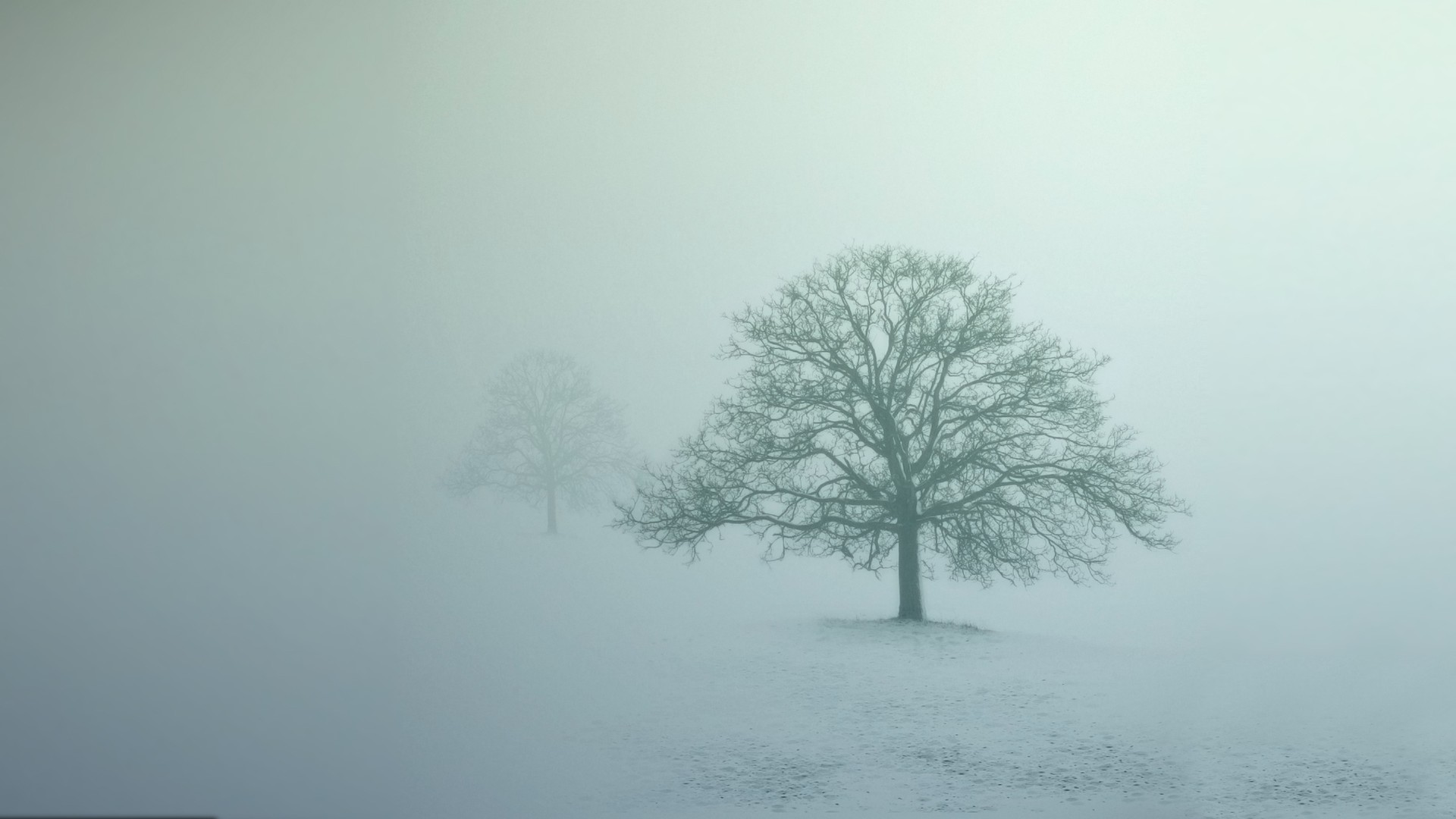 mist Winter Trees Abstract Wallpapers HD  Desktop and