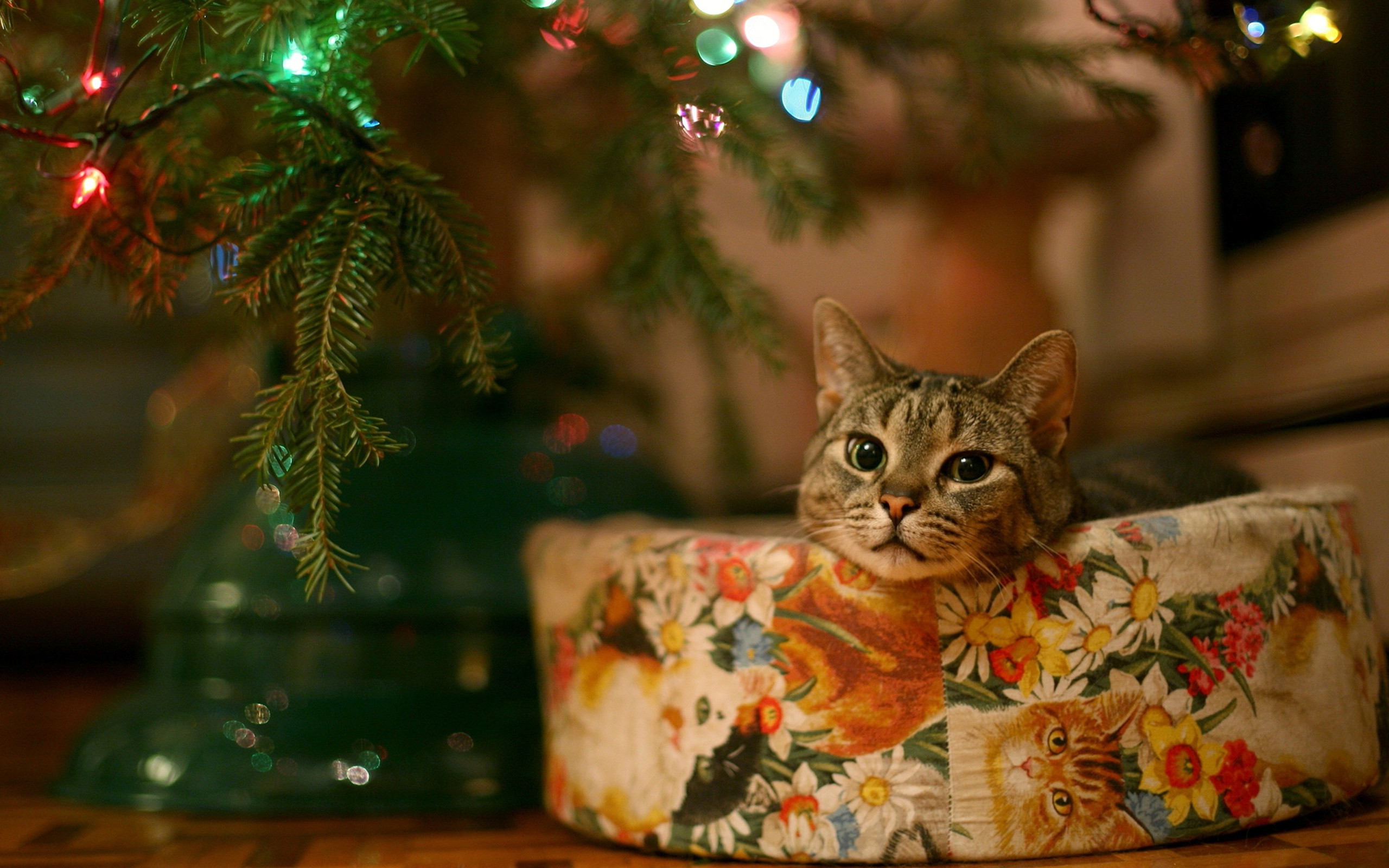 Cute Background Wallpaper For Computer Christmas Lights Animal Hd New Year Cat Animals Lights Leaves Bokeh Wallpapers