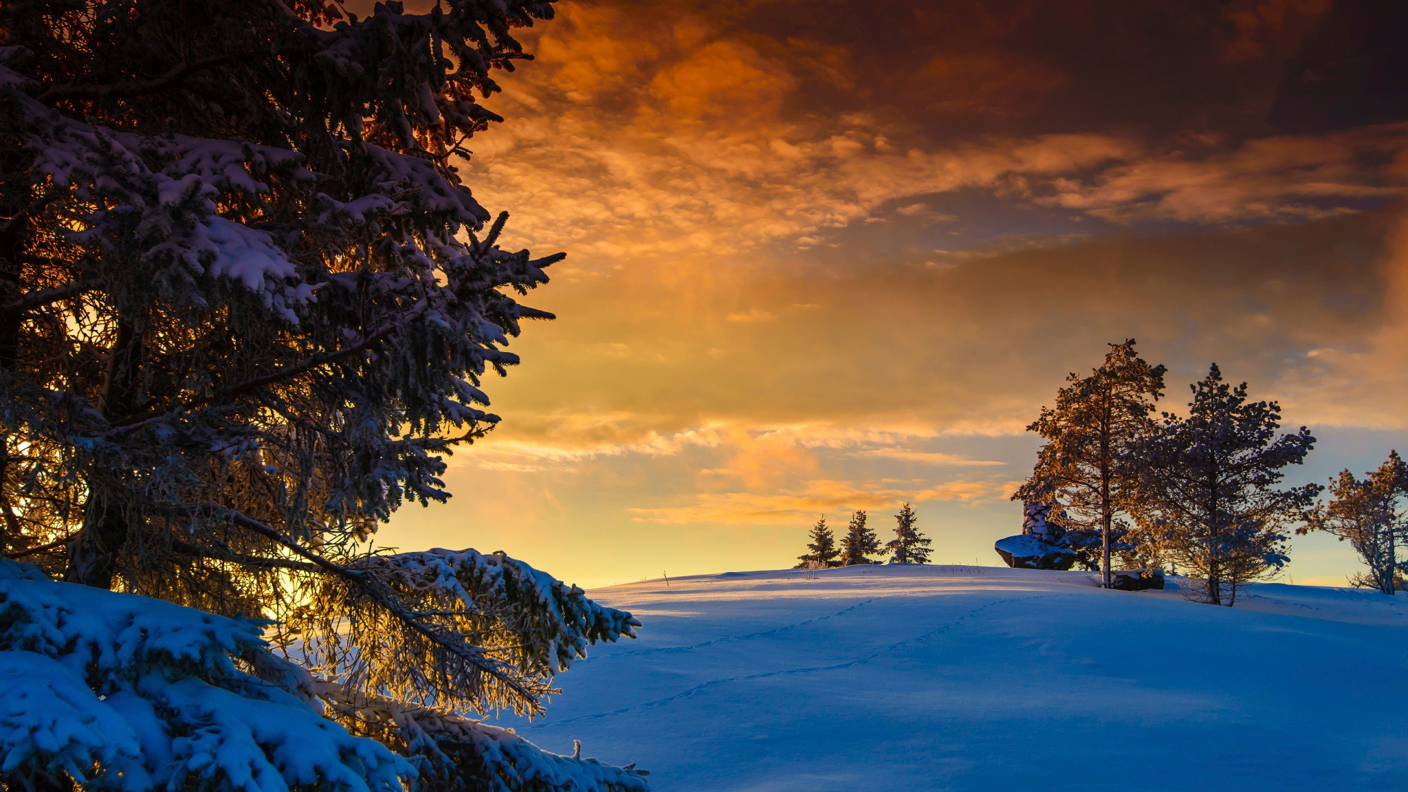 Windows 8 1 Wallpaper Hd Free Download Nature Landscape Winter Snow Norway Trees Sunset
