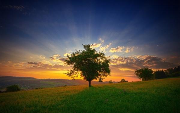 summer field sunset trees landscape