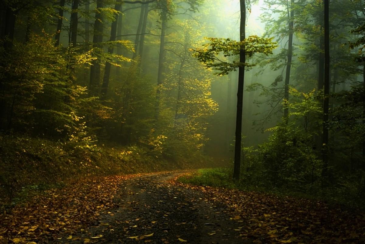 Fall Scene Desktop Wallpaper Fall Path Mist Forest Shrubs Morning Landscape