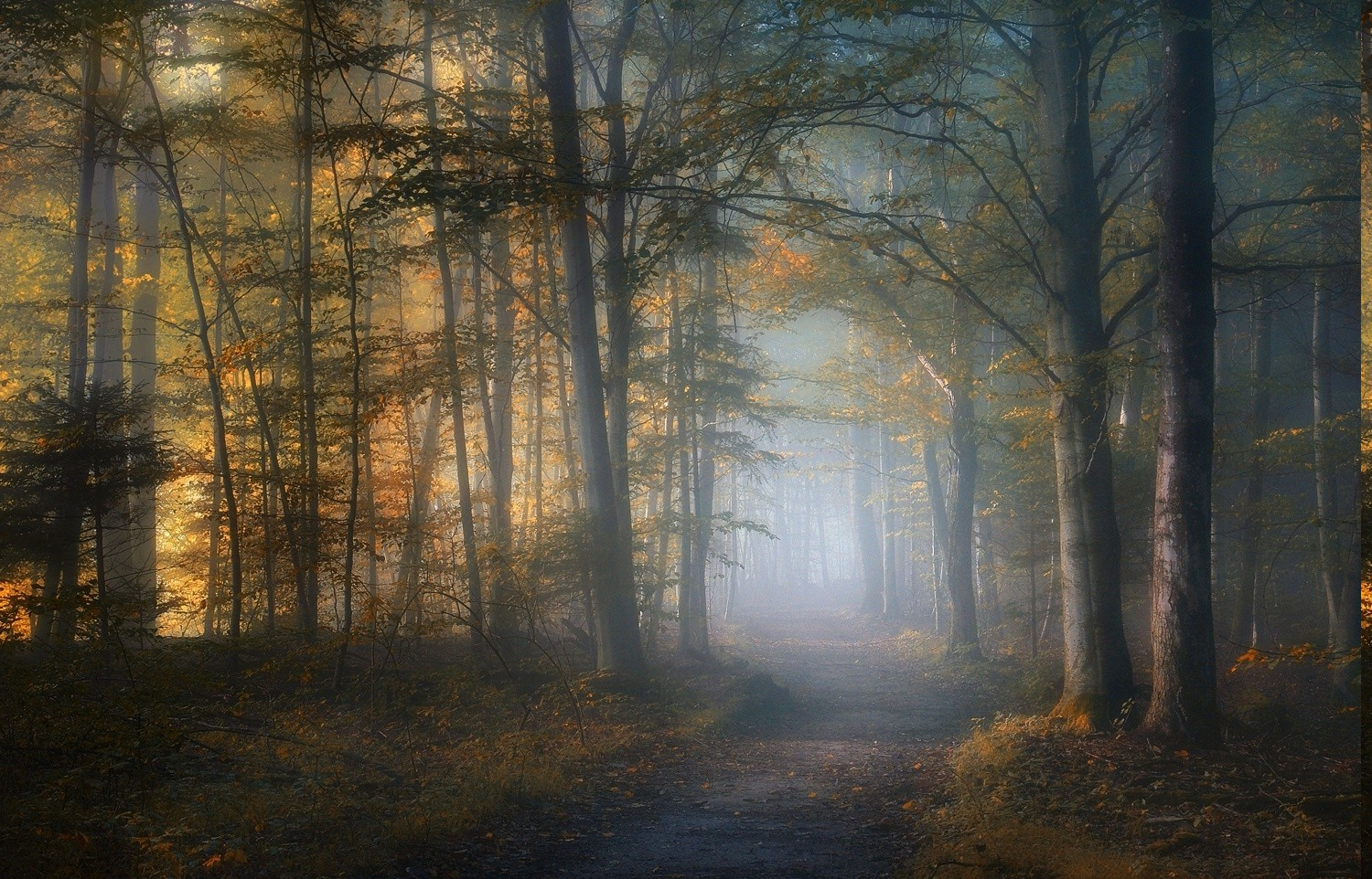 Fall Leaves Wallpaper Mist Path Fall Forest Leaves Trees Sunlight Morning
