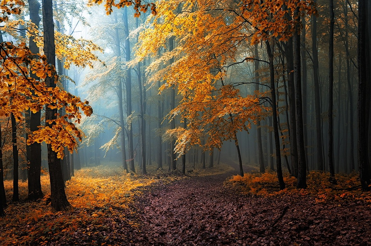 Wallpaper Leaves Falling Fall Mist Leaves Forest Road Trees Path Sunlight