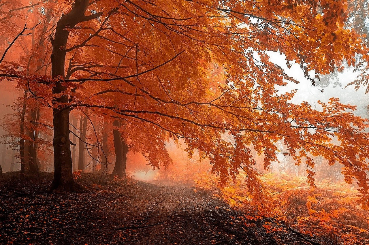Anime Girls Wallpaper 5760x1080 Fall Mist Path Forest Leaves Trees Orange Nature