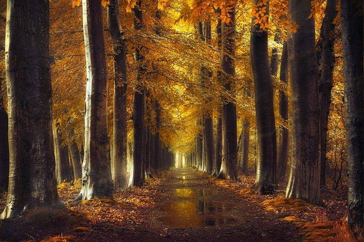 Uhd Wallpapers Fall Fall Gold Path Trees Forest Leaves Rain Water