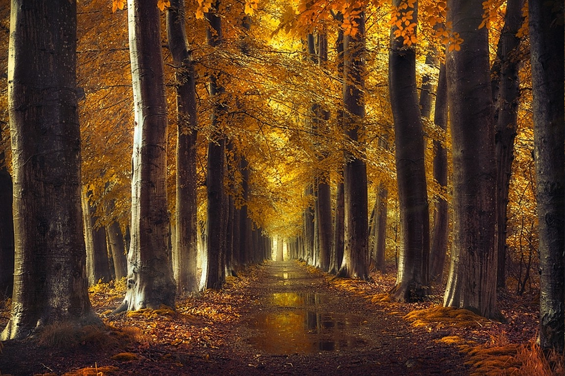 Fall Leaves Hd Mobile Wallpaper Fall Gold Path Trees Forest Leaves Rain Water