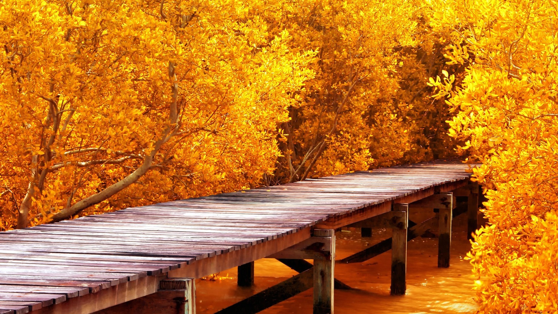 Fall Leaves Hd Mobile Wallpaper Nature Landscape Pier Water Wooden Surface Trees