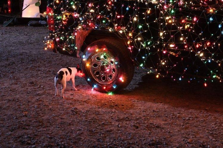 dog car christmas lights
