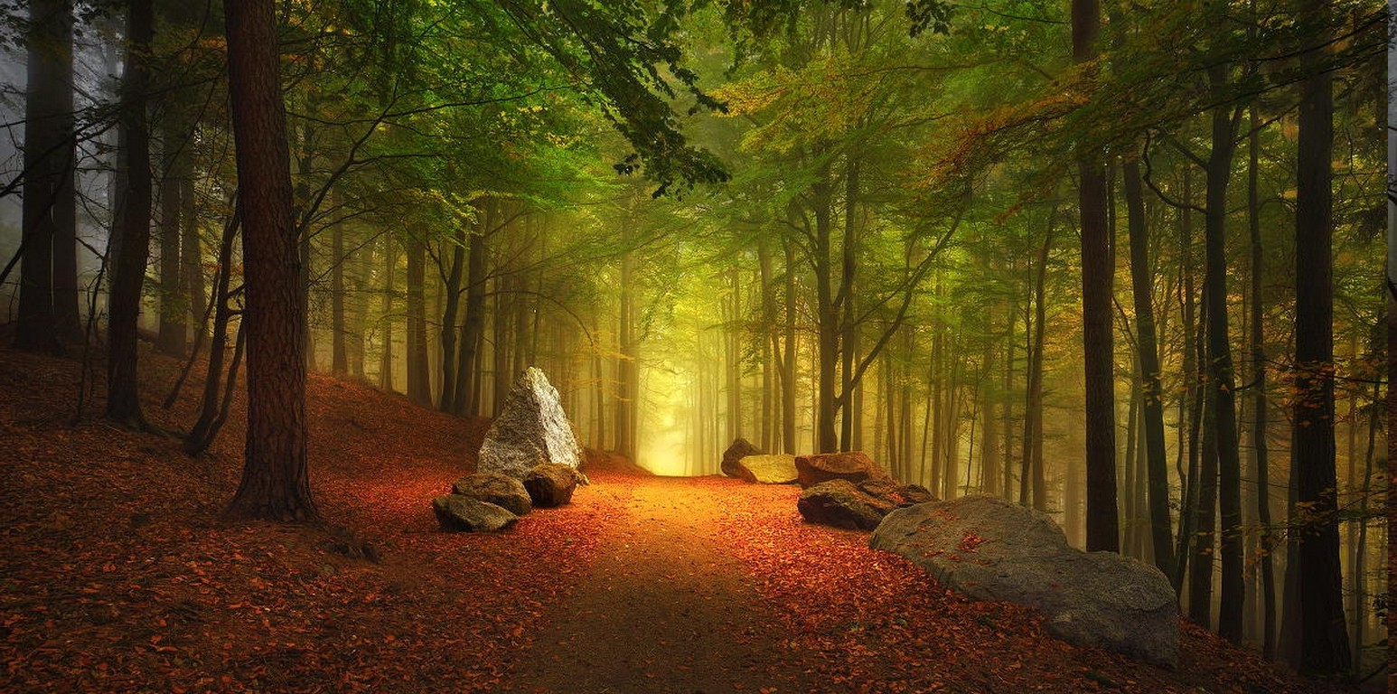 Full Screen Desktop Fall Leaves Wallpaper Forest Path Fall Leaves Hill Trees Germany Mist