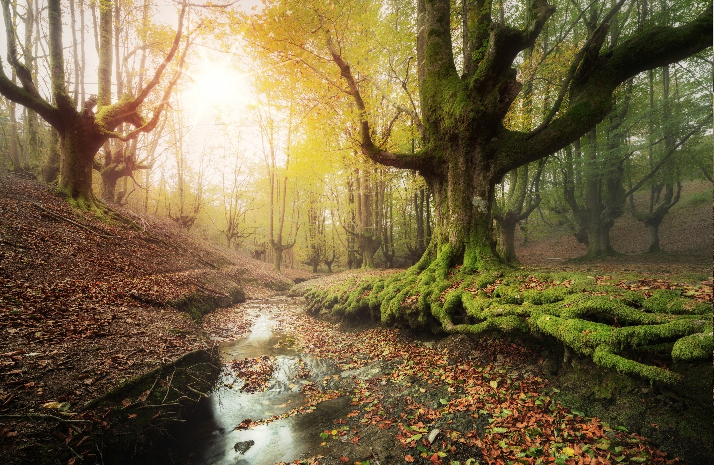 Fall Forest Wallpaper For Desktop Forest Creeks Moss Sunrise Leaves Trees Water Fall