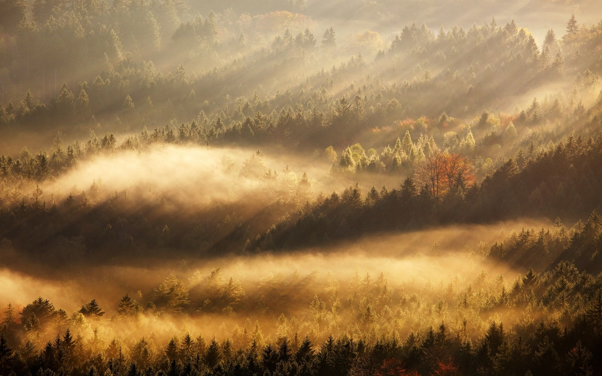 Fall In Love Wallpaper Download Nature Landscape Mist Sunrise Fall Forest Sun Rays