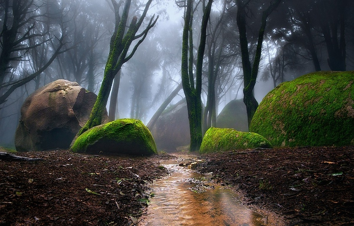Animal Wallpaper Full Hd Nature Landscape Portugal Forest Mist Path Moss