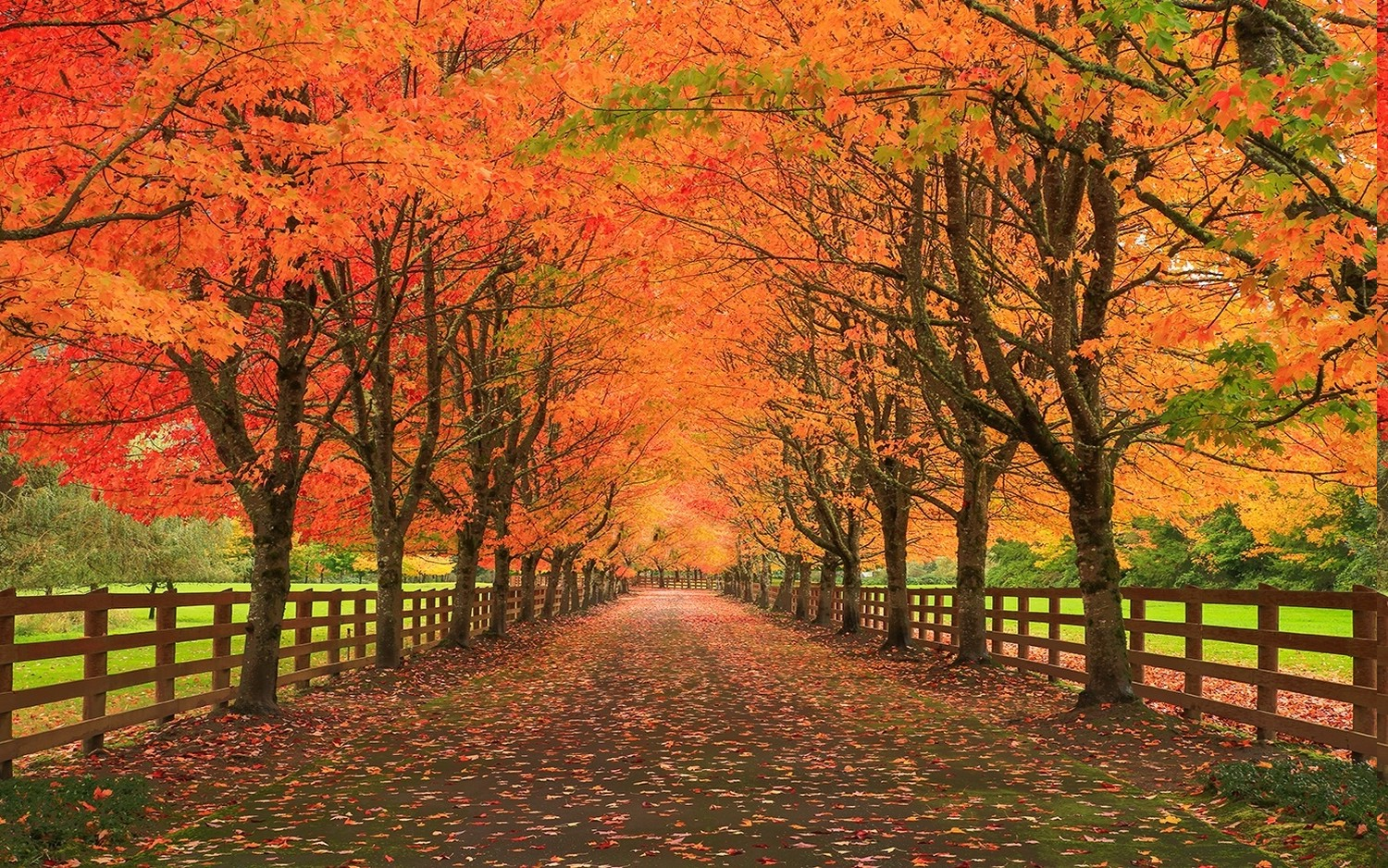Falling Leaves Hd Live Wallpaper Nature Landscape Fall Leaves Road Fence Trees Grass