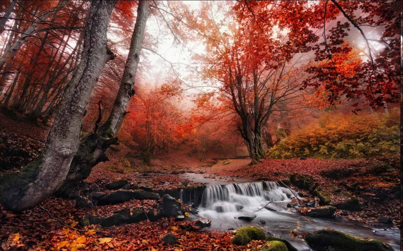 Fall Wallpaper For Computer Screen Nature Landscape Fall Mist Forest Leaves Creeks Red