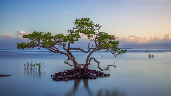 nature landscape trees water