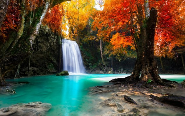 colorful trees waterfall nature