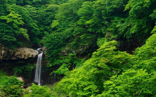 waterfall nature forest trees