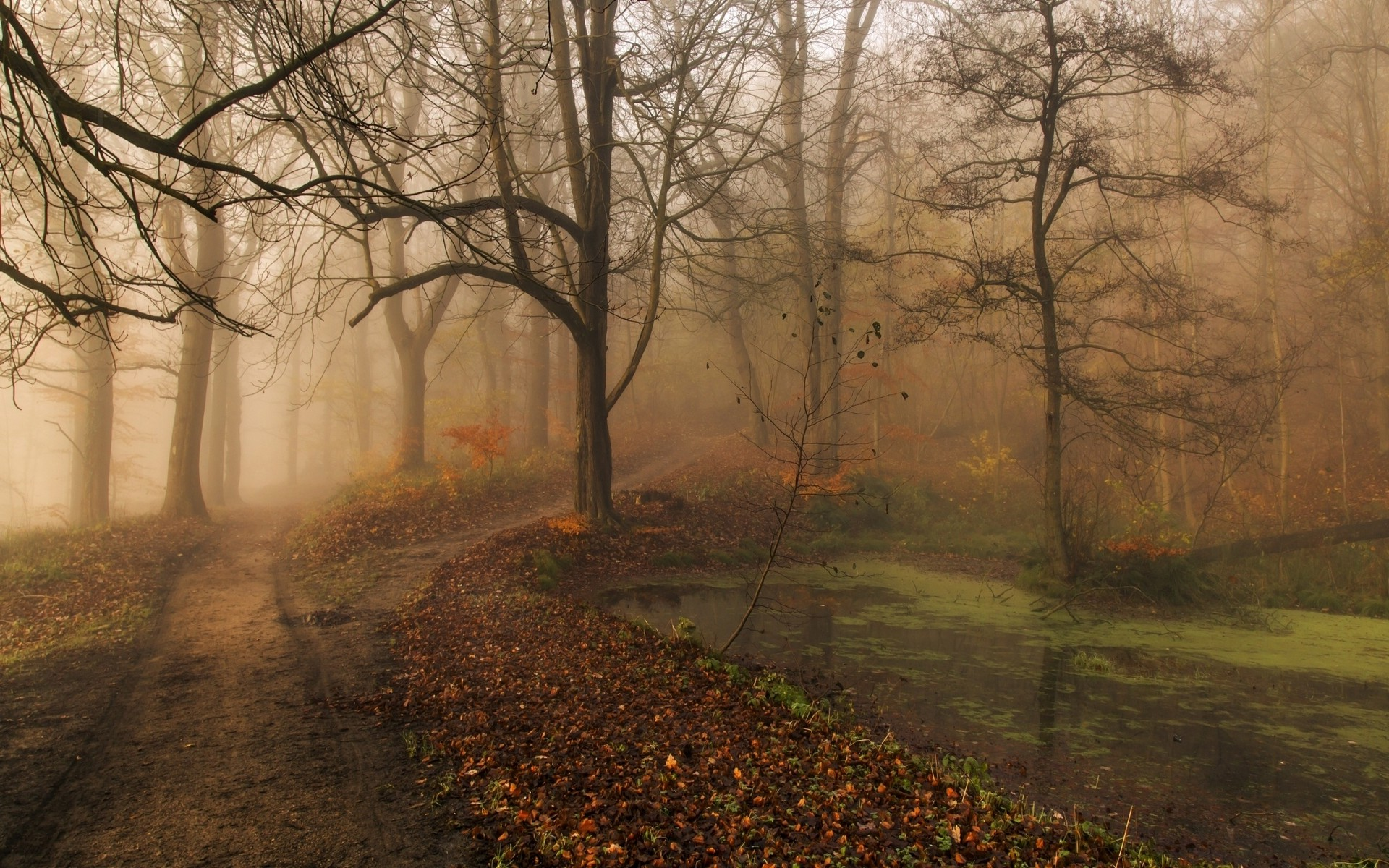 Early Fall Hd Wallpaper Nature Landscape Morning Fall Mist Park Trees Path