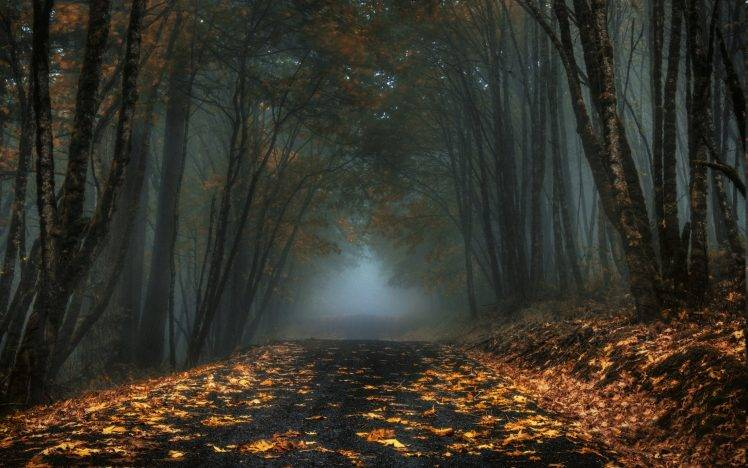Retro Fall Computer Wallpaper Nature Landscape Mist Road Forest Leaves Fall Trees