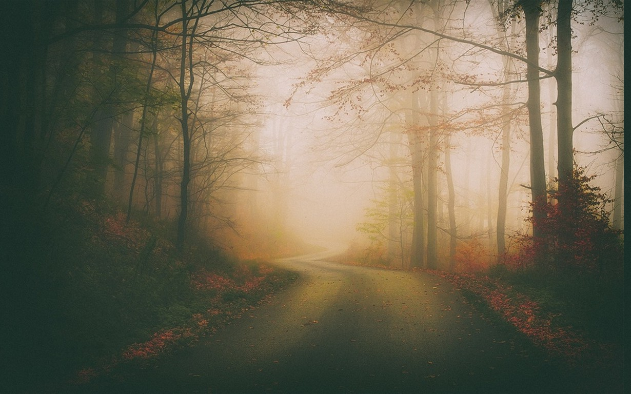 Fall Vintage Wallpaper Landscape Nature Mist Road Fall Forest Leaves Trees
