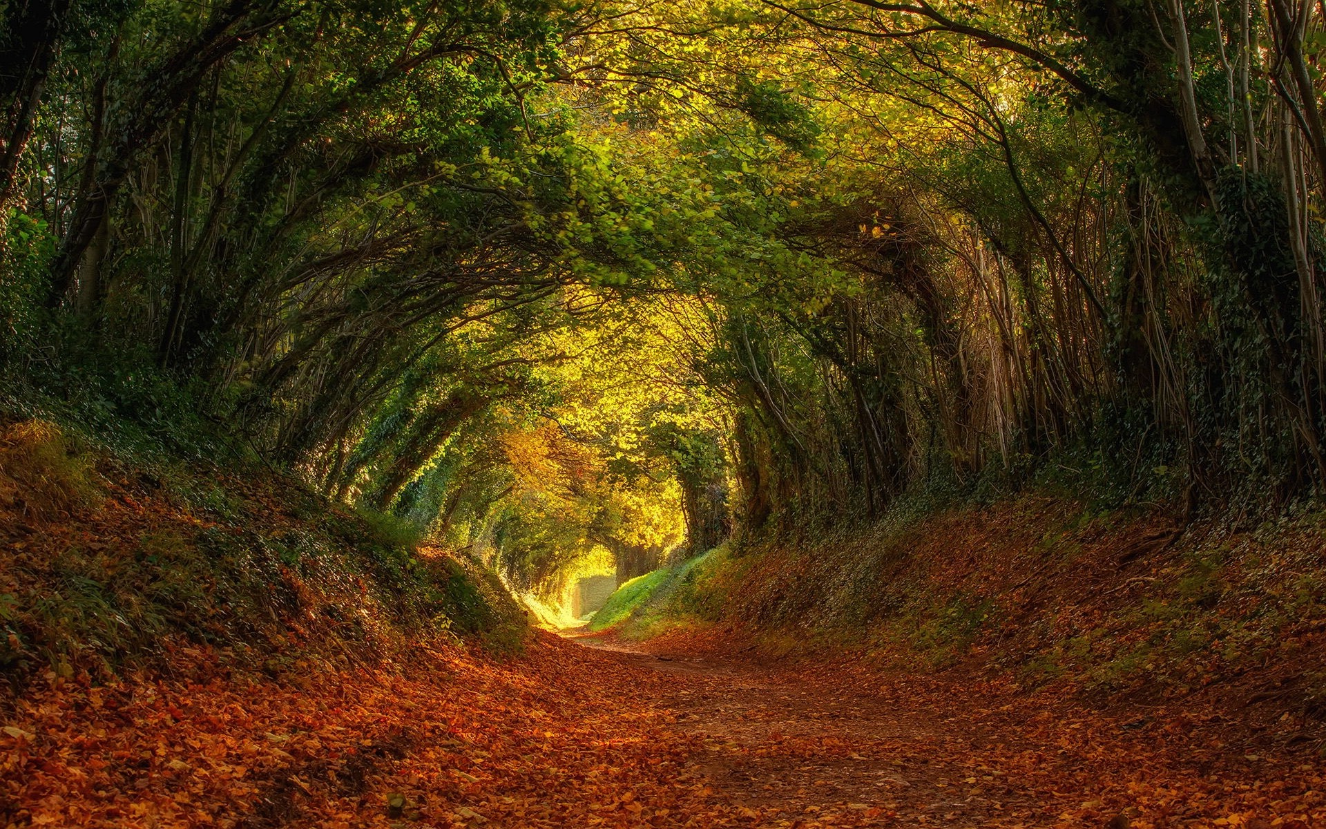 Fall Wallpaper 1600x900 Landscape Nature Trees Leaves Shrubs Tunnel Dry