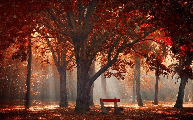 Full Screen Desktop Fall Leaves Wallpaper Nature Landscape Park Trees Fall Mist Leaves Bench